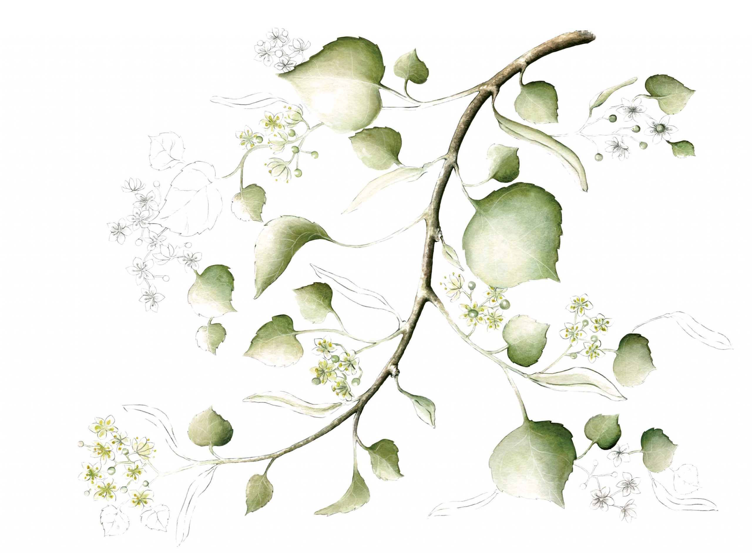 annemarie-boerlind-naturoyale-illu